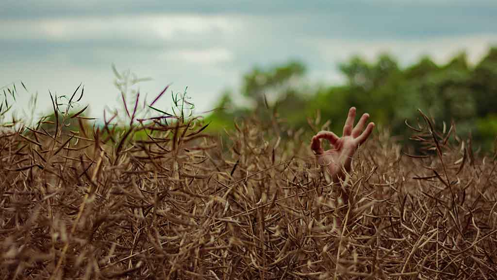Person giving 'all okay' sign in field of wheat