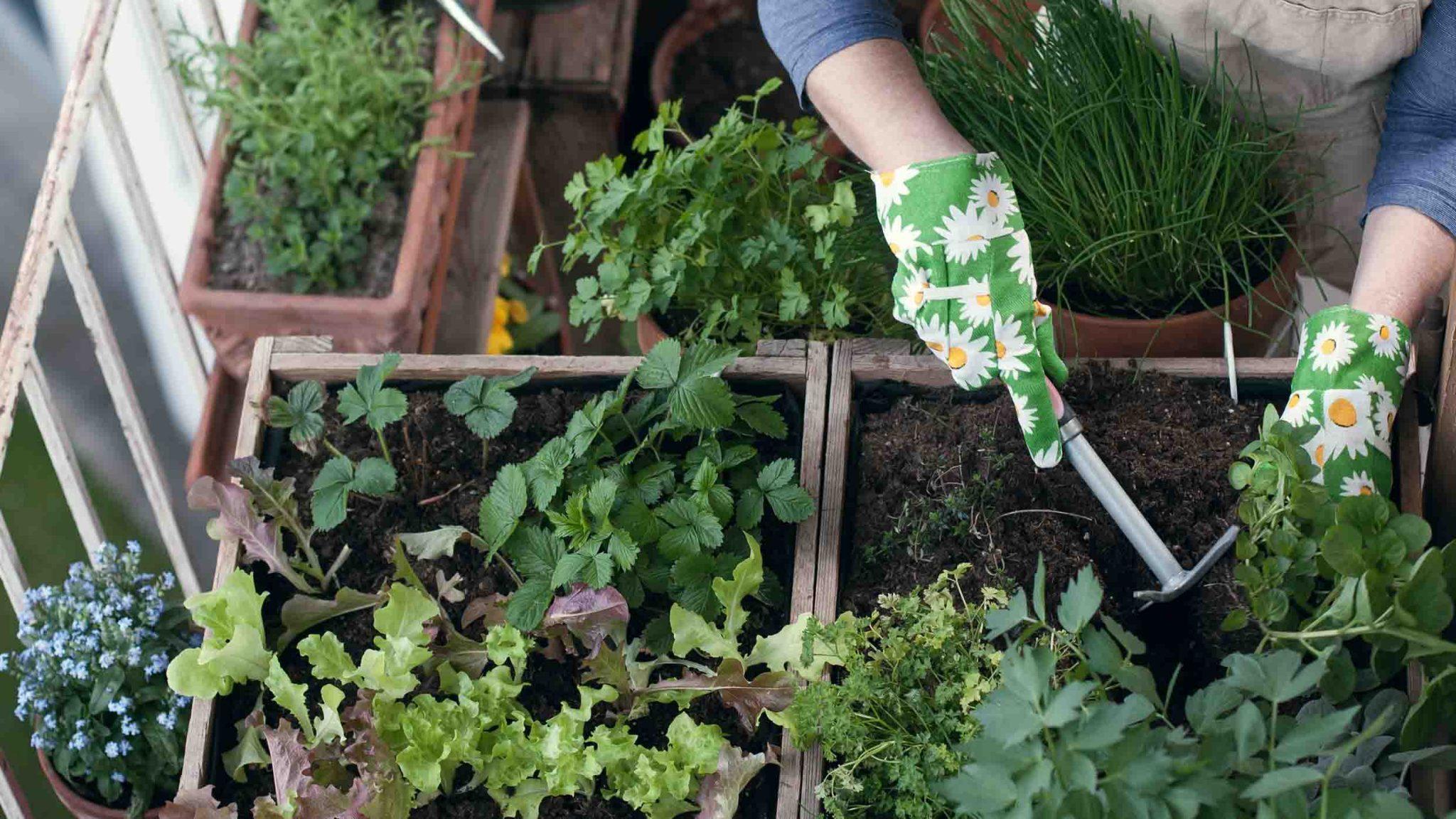 Person gardening on balcony