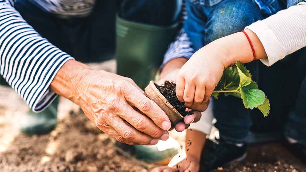 Person with child, planting vegetables.